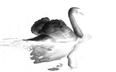 El cisne negro que irrumpió en las PASO